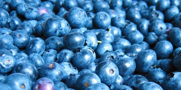 Buying Blueberry Bushes